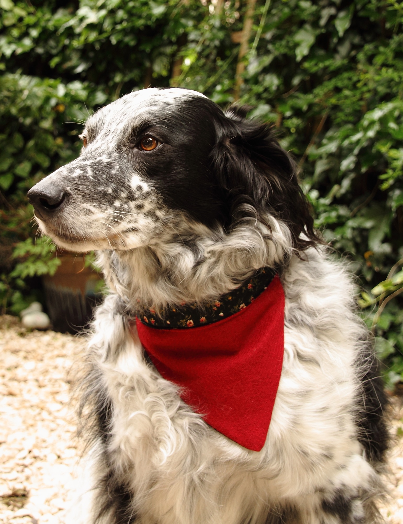Harris Tweed Dog Bandana (Large)